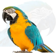 macaw for sale in jalandhar