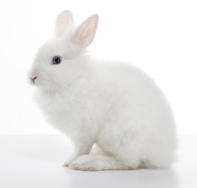 rabbits for sale in jalandhar punjab